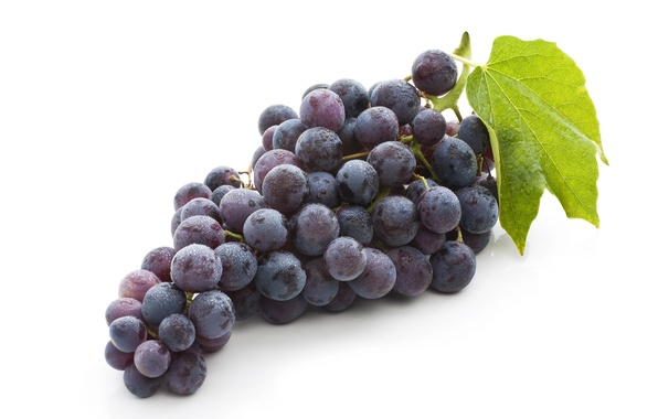 Picture leaves, fruit, bunch of grapes