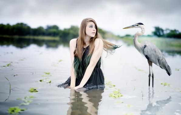 Picture water, girl, bird