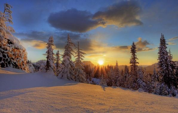 Picture winter, forest, snow, mountain, National Park, Mount Rainier