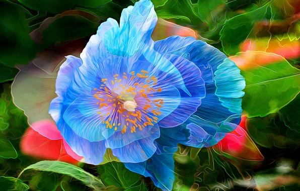 Picture flower, line, abstraction, paint, Mac, petals