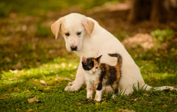 Picture dog, puppy, kitty, friends