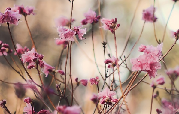 Picture leaves, macro, flowers, branches, nature, pink, plant