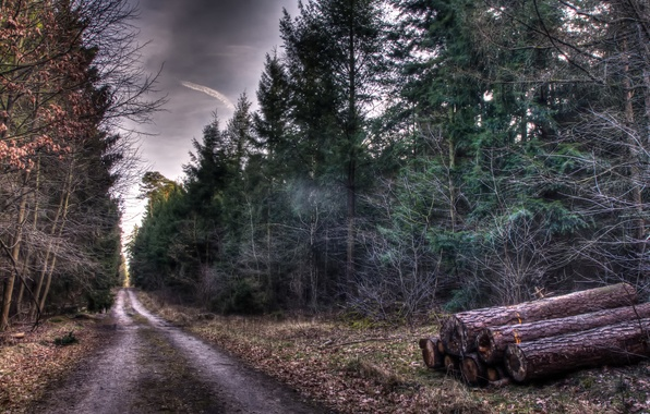 Picture road, autumn, trees, nature, HDR, Forest, logs, track