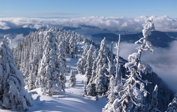 Picture winter, forest, clouds, snow, trees, mountains, Canada, panorama, Vancouver, Canada, British Columbia, Vancouver, British Columbia, ...