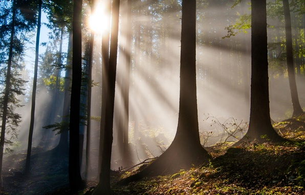 Picture forest, leaves, rays, trees, nature