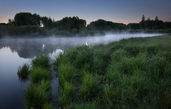 Picture forest, grass, fog, lake, dawn, morning
