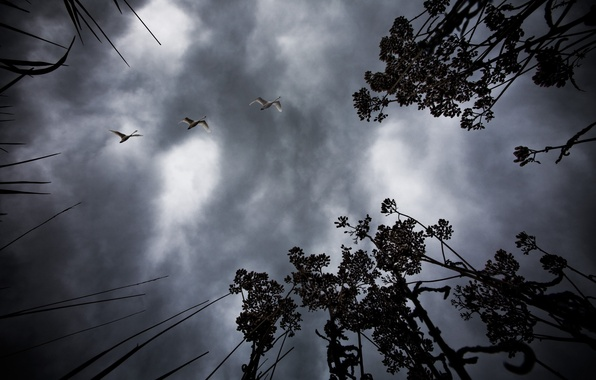 Picture the sky, birds, night, branches, nature, tree, landscapes