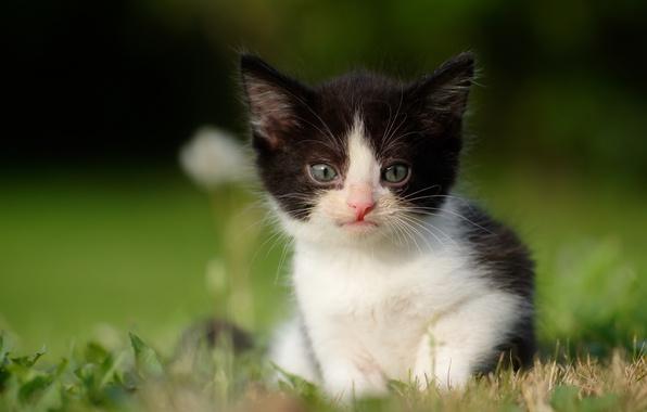 Photo wallpaper bokeh, look, baby, kitty