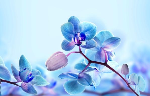 Picture macro, nature, branch, petals, Orchid