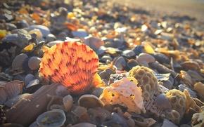 Wallpaper shore, sink, South Carolina, shell, USA