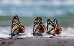 Picture macro, glare, Butterfly, three, trio