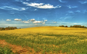 Picture field, nature, spring, sky, field, landscape, flowers, rape