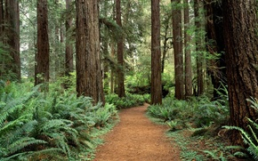Picture forest, trees, Washington