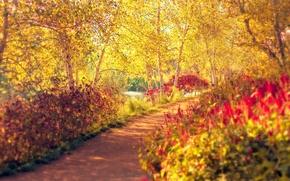 Wallpaper autumn, trees, Park, track, birch, path, the bushes