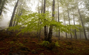 Picture autumn, forest, trees, fog, slope