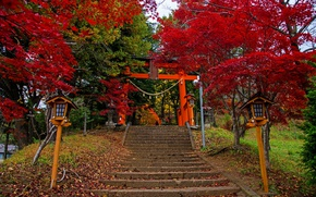 Picture autumn, leaves, trees, Park, Japan, lights, ladder, stage, colorful, Fujiyoshida