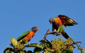 Picture the sky, birds, branches, nature, tree, parrots