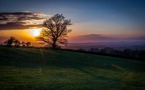 Picture landscape, sunset, tree