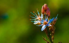 Picture flower, nature, petals, exotic