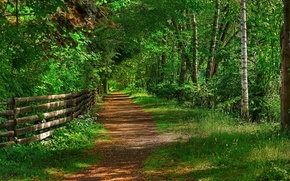 Picture road, forest, trees, Park, the fence