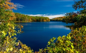 Picture autumn, trees, branches, lake, New York, the state of new York, Adirondack Park, Rockwood Lake, …