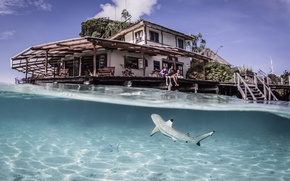 Picture water, transparency, fish, resort, Laguna, Indonesia, Cross-Ampat, tiger, blue shark