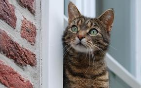Picture mustache, wool, Cat, window