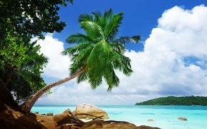 Picture sea, landscape, nature, tropics, Palma, stones, stay, sea, landscape, nature, rocks, palm, tropics, recreation
