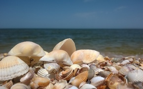 Picture sand, sea, shell