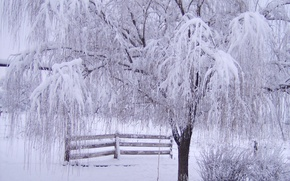 Picture frost, snow, branches, tree, the fence, Winter