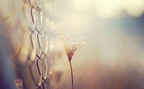 Picture macro, mesh, plant