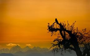 Picture the sky, mountains, tree, owl, bird, silhouette, glow