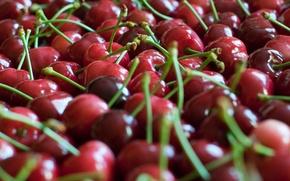 Wallpaper focus, berries, a lot, cherry, red