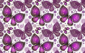 Picture butterfly, pattern, wings