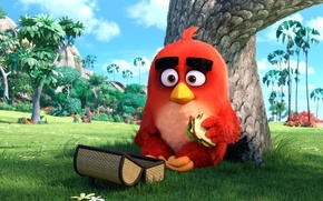 Picture cinema, animation, red, grass, Red, game, nature, bird, eyes, wings, feathers, tree, birds, cartoon, movie, …