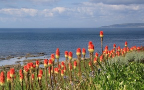 Picture sea, the sky, flowers, mountains, shore, exotic