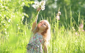 Picture summer, girl, dandelions