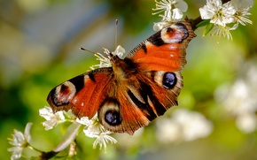 Picture spring, macro, flowers, butterfly
