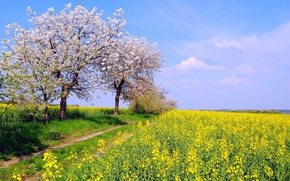 Wallpaper spring, track, grass, the sky, the sun, yellow, field, flowering, trees, flowers