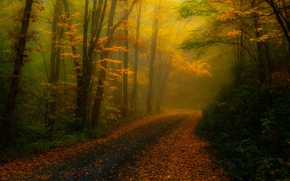 Picture North Carolina, nature, fog, treatment, trees, road, foliage, autumn, forest, USA