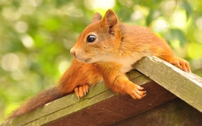 Picture animal, foliage, protein, profile, house, rodent, feeder