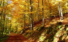 Picture forest, leaves, trees, trail, Autumn, forest, falling leaves, trees, nature, autumn, leaves, path