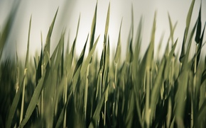 Wallpaper photographer, grass, greens, markus spiske, sedge