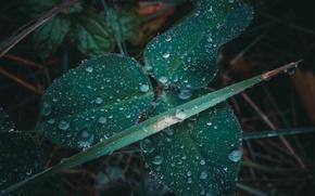 Picture autumn, grass, drops, macro, rain, clover