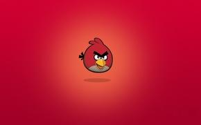 Wallpaper birds, cartoons, Rio, angry birds, rio