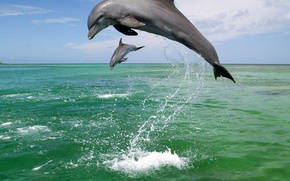 Picture sea, squirt, dolphins