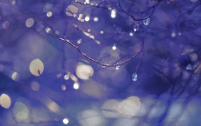 Picture drops, branches, bokeh