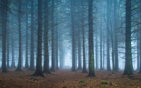 Picture forest, leaves, trees, fog, the way, branch