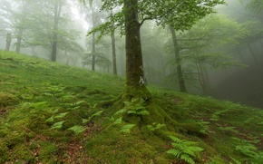 Picture forest, grass, leaves, trees, plants, slope
