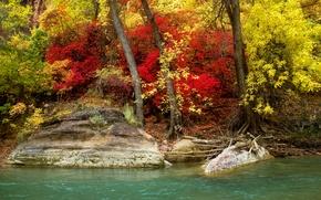 Picture autumn, forest, trees, river, stones, shore